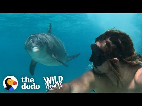 Meet Jojo, The Friendliest Wild Dolphin!