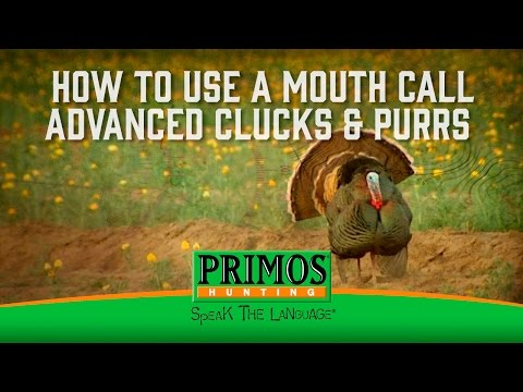 How to Use a Mouth Turkey Call - Advanced Clicking and Pluming video thumbnail