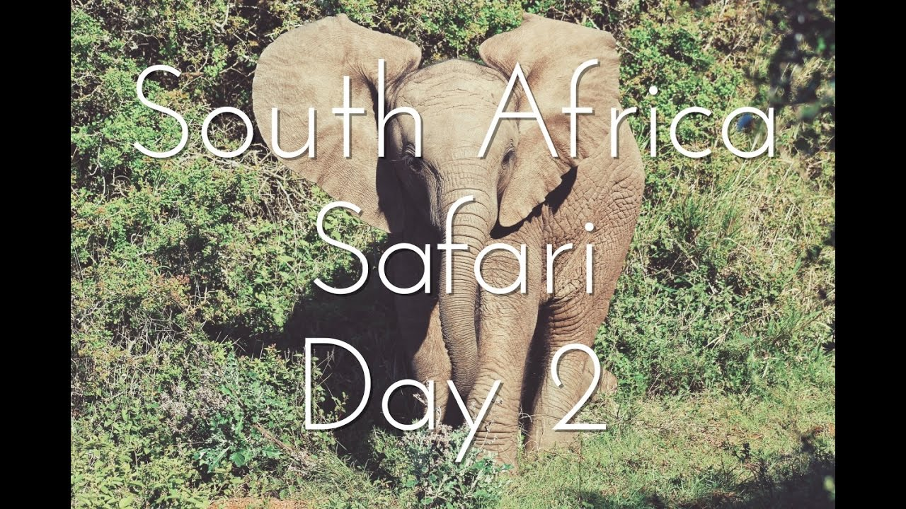 South Africa, Safari: Day 2 | Youtube By Harrison