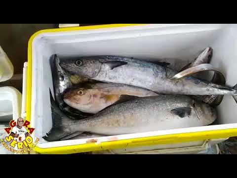 Pescadores de Juquitiba em Alto Mar fizeram a Festa dessa Vez