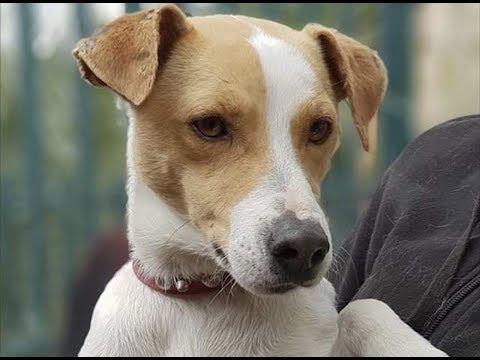 VIDÉO. Adopte un chien avec Corse-Matin : découvrez Malabar