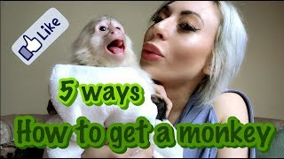 How To Get A Monkey