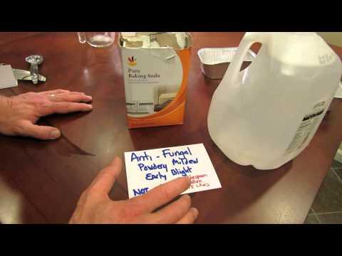 Kuko mycosis sintomas ng paggamot