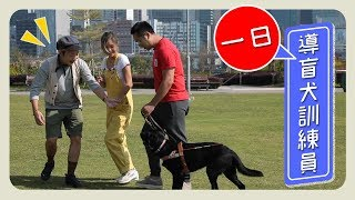 ▍一日導盲犬訓練員🐶