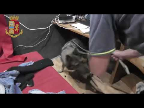 Sesso con un video Cavallo cane da vedere online