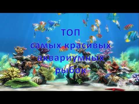 Топ самых красивых аквариумных рыбок. Top most beautiful aquarium fish.