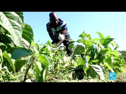 Des migrants ont monté une coopérative dans l'agriculture. Crédit : France 24