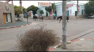 La animales se adueñan de las calles