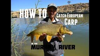HOW TO: Catch European Carp | Murray River, SA