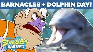 Dolphin Day + Barnacles Mashup! 🐬 SpongeBob SquarePants | #TBT