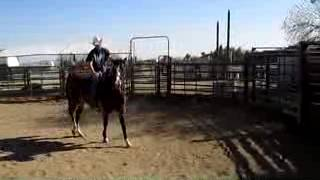 FOR SALE: MOONLIGHT TRAIL RACE BRED APPENDIX MORE NEW VIDEO