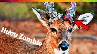 #76 Sự Thật Nổ Não SS02E06: Đại Dịch Hươu Zombie! 😱😱😱
