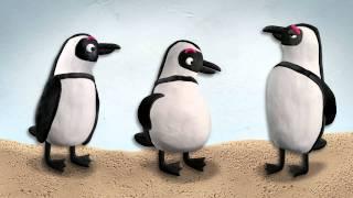 Rock, Paper, Scissors - The Toronto Zoo's Endangered African Penguins