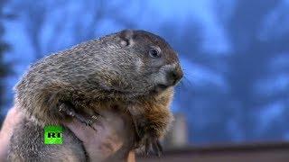 Día De La Marmota Phil Predice Que El Invierno Durará 6 Semanas Más