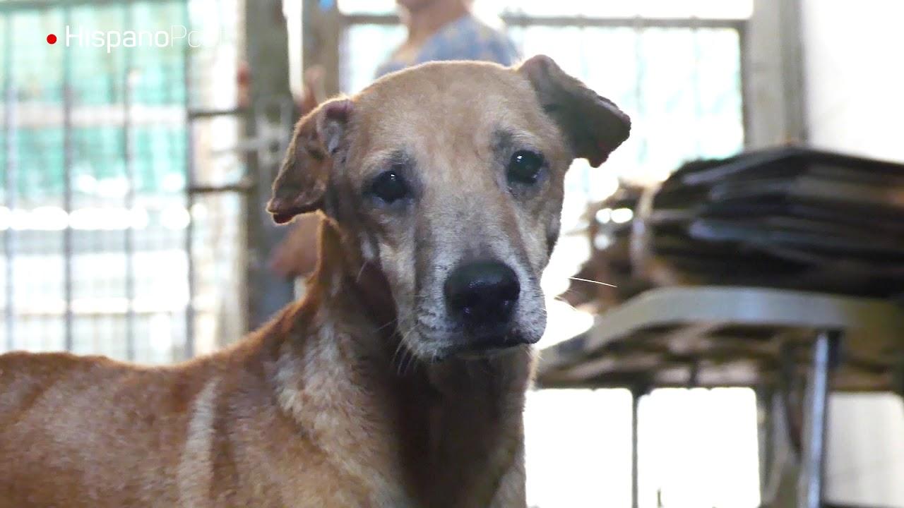 El olvido humano condena la vida de perros en un refugio venezolano
