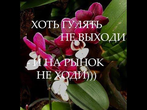 Мы снова сделали это...!)))))