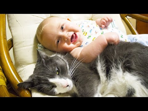 Cute Cats And Dogs Love Babies Compilation (2014)