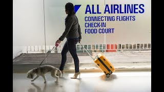 Traveling with Dogs to the United States