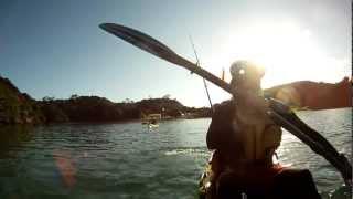 preview picture of video 'Rawhiti kayak fishing Paddleguy.com trip report'
