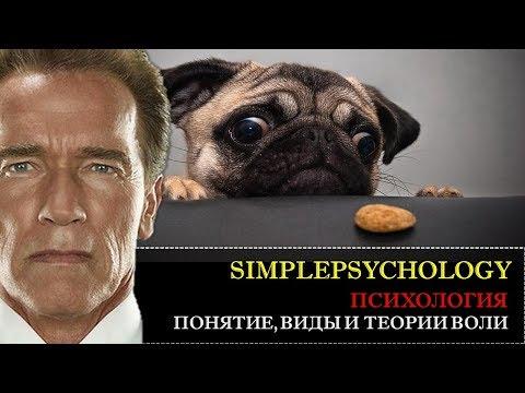 Психология. Понятие, виды и теории Воли.