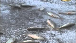 Наживки для ловли рыбы весной на цимлянском водохранилище