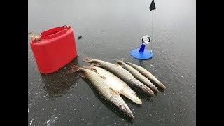 Рыбалка в подмосковье на истринском водохранилище что и где ловится