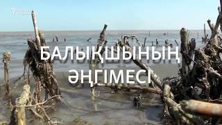 """""""Аралдан көшіп кеткендер қайта келіп жатыр"""""""