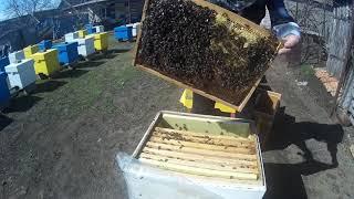 Сокращение пчелиного гнезда весной по методу Блинова
