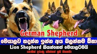 German Shepherd ගැන සිංහලෙන් | Facts About German Shepherd | Awata