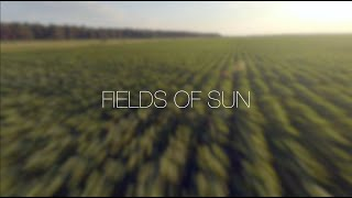 Cinematic FPV - Fields of Sun