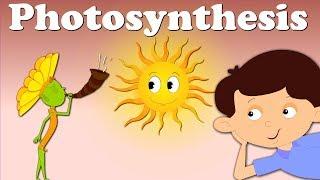 Photosynthesis | #aumsum