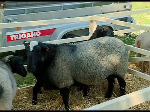Sredstva za stočarstvo