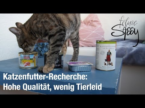 Katzenfutter Recherche – Hohe Qualität, wenig Tierleid?