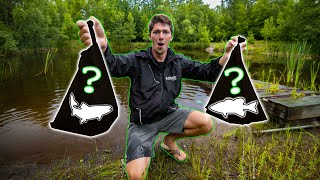 First Time STOCKING Fish In My BACKYARD POND!! (Pond Restoration Part 2)
