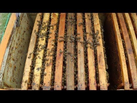 Работа с пчелой на любительском точке в апреле