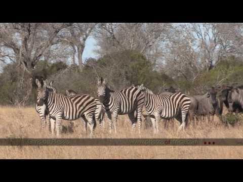 Video of Kruger Park Wildlife Book 2.0