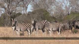 Manyeleti Game Reserve - South Africa Travel Channel 24