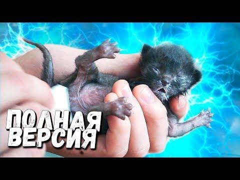 Спасение новорожденного котенка. Полная версия / SANI vlog