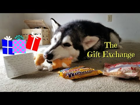 The Gift Exchange With Danny Direwolf February 2018