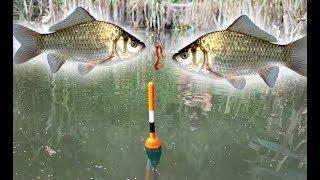Какой хороший день для рыбалки