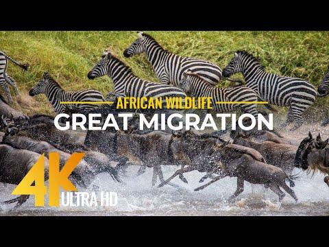 Imágenes Aéreas De La Fauna De Kenia
