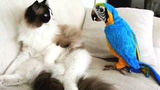 Смешные Попугаи и Кошки - новый сбрник [2016 HD]