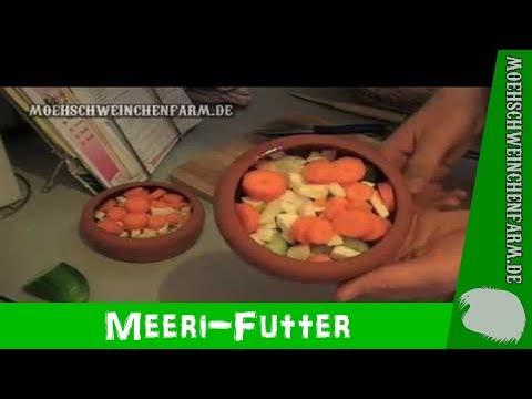 Meerschweinchen - Futter, Futter, Futter