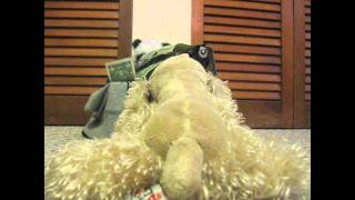 Webkinz music video~ Whos got your money~ Tina Parol ♫♪