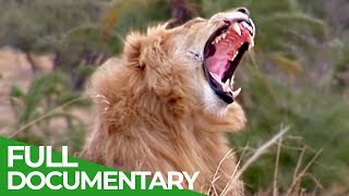 The Greatest Animal Migration | Free Documentary Nature