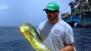 Fish Mavericks Captain Chunkys Mahi