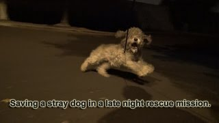 Download Youtube: Saving Oakley in a late night rescue mission.  Please help her find a home.