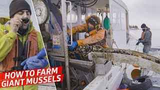 How a High-Tech Mussel Farm Produces 7,000 Lbs of Gigantic Mussels per Day — Dan Does thumbnail