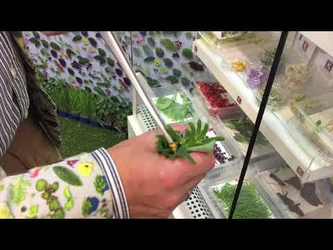 Koppert Cress Vegan Oyster
