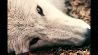 Знакомства волчата talk фото знакомства в приволжье самарской области